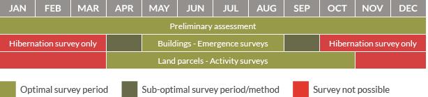 Survey calendar for bats
