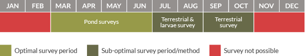 Survey calendar for great crested newts
